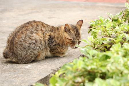 Cats and plants 免版税图像
