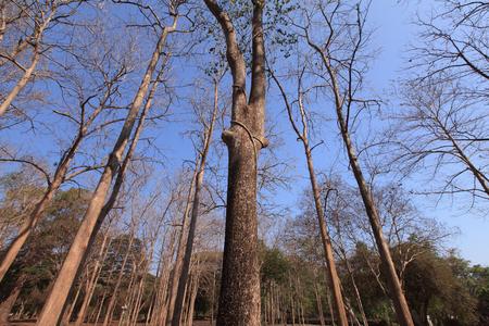arboles secos: �rboles muertos en el bosque.