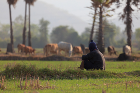 man s: A man s sitting in a field with his a group of cow. Stock Photo