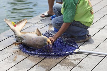 bagre: El pescador cogi� un pez gato gigante. Foto de archivo