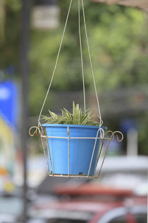 hanging basket: Hanging basket of flowers. Stock Photo