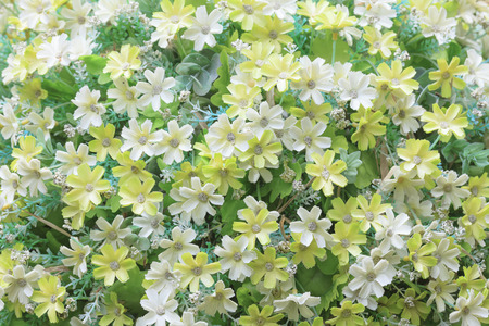 veronica flower: Close-up to Little daisy flowers. Stock Photo