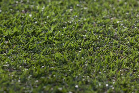 the field and in depth: Green grass field. - (Depth of field) Stock Photo