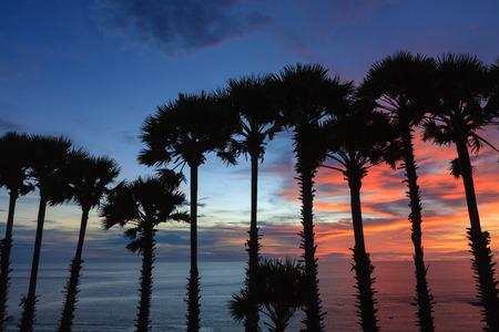 albero da frutto: Silhouette cime degli alberi di palme durante il tramonto. Archivio Fotografico