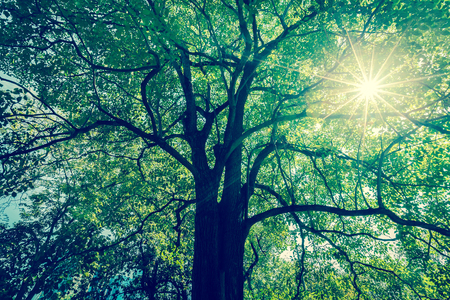 Background of tree branches with green foliage with sun radius. - (Split tone) Фото со стока