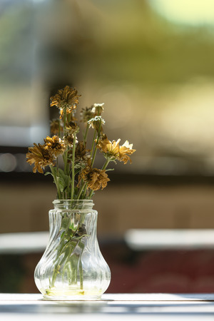 glass vase: Close up to witherd flowers in a glass vase. (Window light and vintage style)