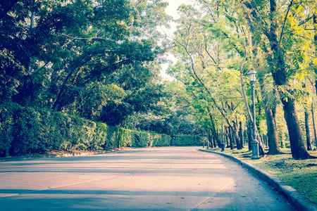 split road: Beautiful road in deep green and yellow forest in wild. - Split tone Stock Photo