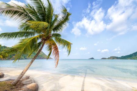 trat: Palm tree and beach on tropical island.