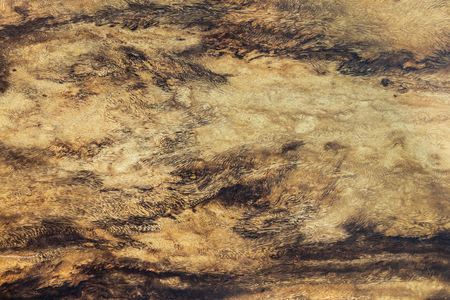 Rustic surface wood table texture template and rustic wood table texture top for your design.