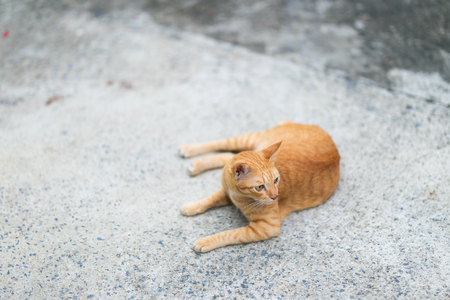 Ginger cat sitting on the ground. Фото со стока