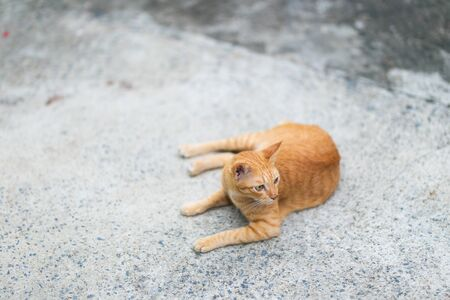 Ginger cat sitting on the ground. Imagens