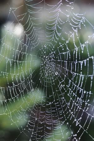 Spinnenweb bedekt met dauw
