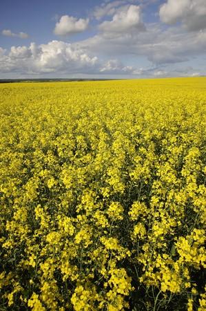 Manitoba landelijke gebieden in de herfst klaar voor de oogst