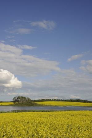 Landelijke Manitoba velden in de herfst klaar voor de oogst