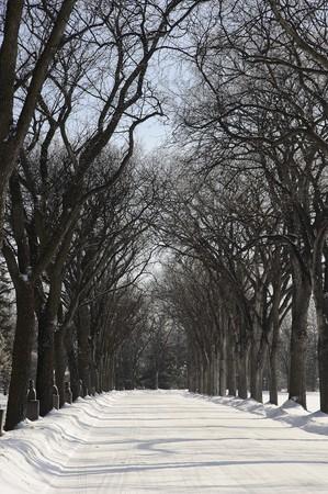 assiniboine: Walking in Assiniboine Park in Winnipeg, Manitoba Stock Photo