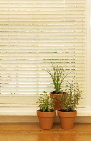 Herbs in a window
