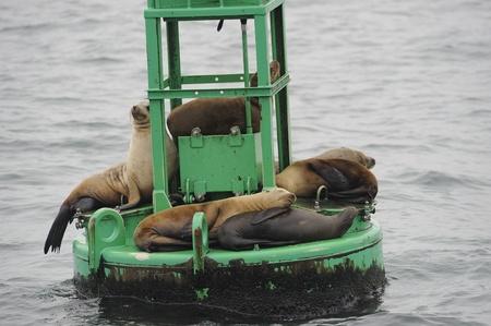 Sea Lions sleeping Stok Fotoğraf