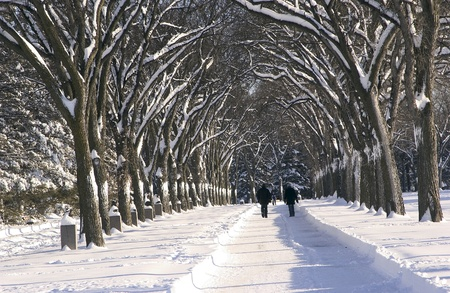 winter and trees in Assiniboine Park, Winnipeg, Manitoba