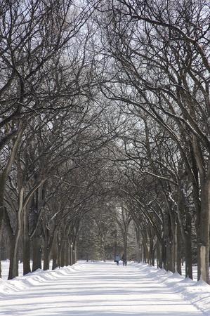 assiniboine: winter and trees in Assiniboine Park, Winnipeg, Manitoba