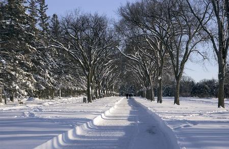 Assiniboine Park in the winter, Winnipeg, Manitoba