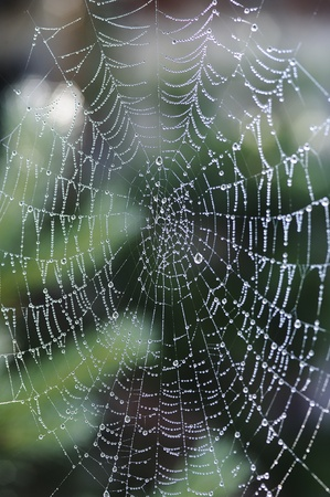 dew covered spider web