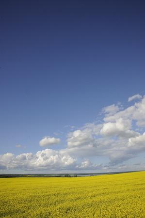 landelijke boerderij velden in de herfst, Manitoba, Stockfoto