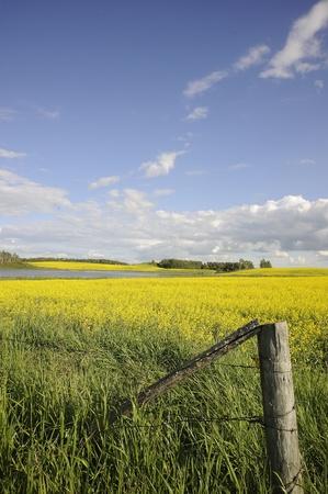 rural farm fields in fall, Manitoba, Stock fotó