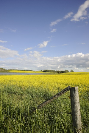 rural farm fields in fall, Manitoba, Stock Photo