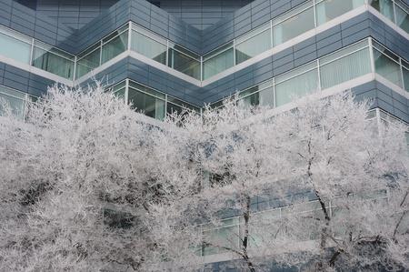 hoar frost in downtown, Winnipeg, Manitoba