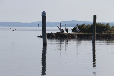 sunrise ocean: Early morning on the water, pelicans resting Stock Photo