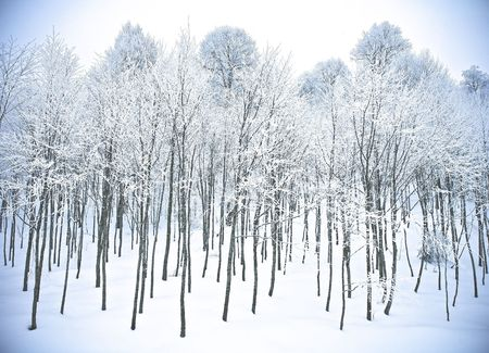icey: winter forest hills in snow