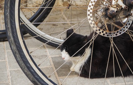 Cats laying on the streets in Morocco