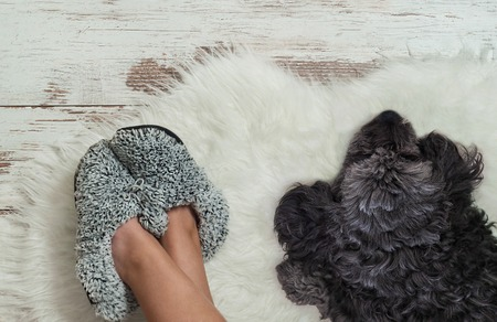 Dog lying on a wooden floor near slippers. Cozy, warm and comfortable
