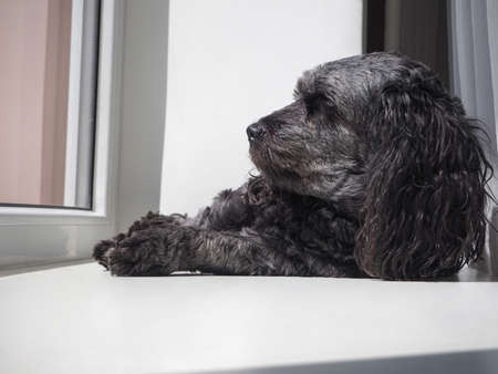 Cute dog relaxing by window at home