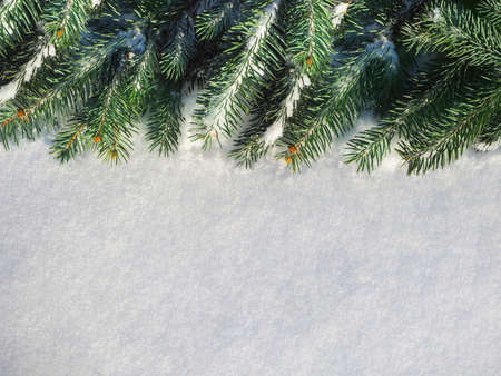 Closeup of Christmas tree with snow background