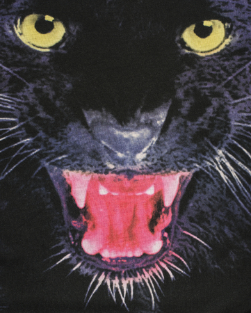 Close up on the head of a black panther on fabric. Big panther eyes and mouth as background.