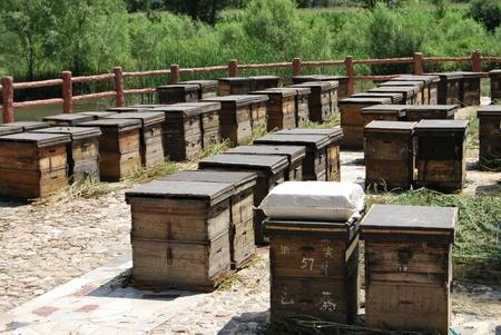 beekeeping: Beekeeping box
