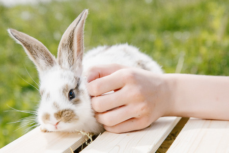 A small rabbit home, a black and white suit, a bunny eating a green grass, a pet in a wooden box. The girl keeps the rabbit in her arms.