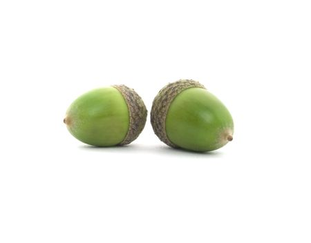 two green acorns isolated on white background Stock Photo - 3515535