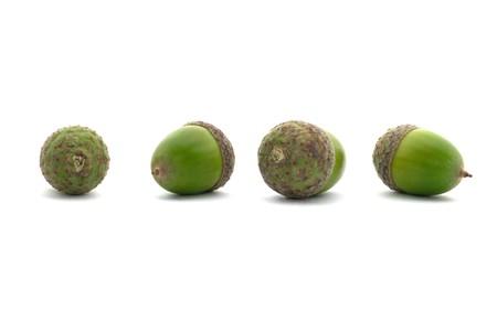 four green acorns isolated on white background photo