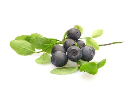 bilberries: bilberries isolated on white background