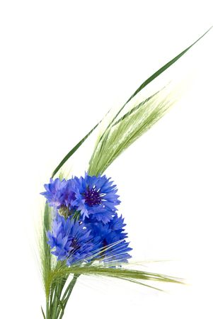 cornflowers and ears isolated on white background photo