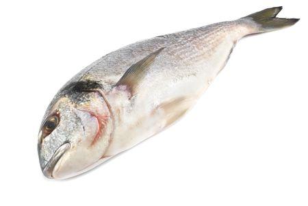 dorado fish isolated on white background Stock Photo - 6618863
