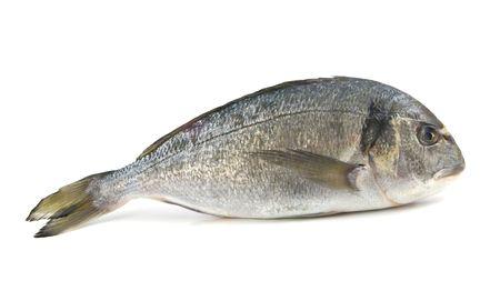 dorado: dorado fish isolated on white background Stock Photo
