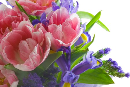 isolated irises: bouquet of fresh spring pink tulips and iris Stock Photo