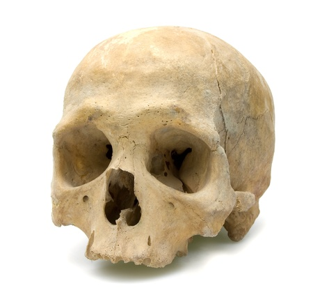 human skull isolated white photo