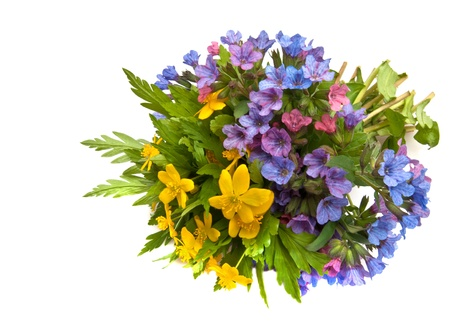 bunch of spring flowers buttercup and lungwort photo