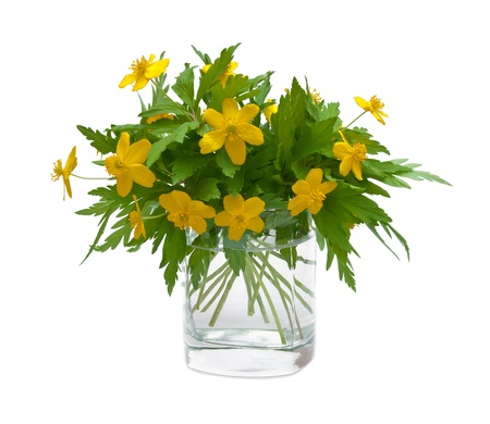 buttercups in glass isolated Stock Photo - 17968078