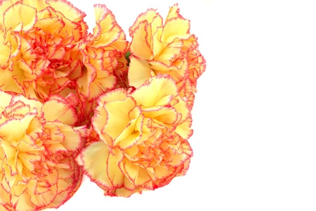 Beautiful bouquet of multicolored carnations isolated on white photo