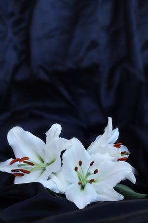 Three lily flowers macro close-up on black silk Reklamní fotografie